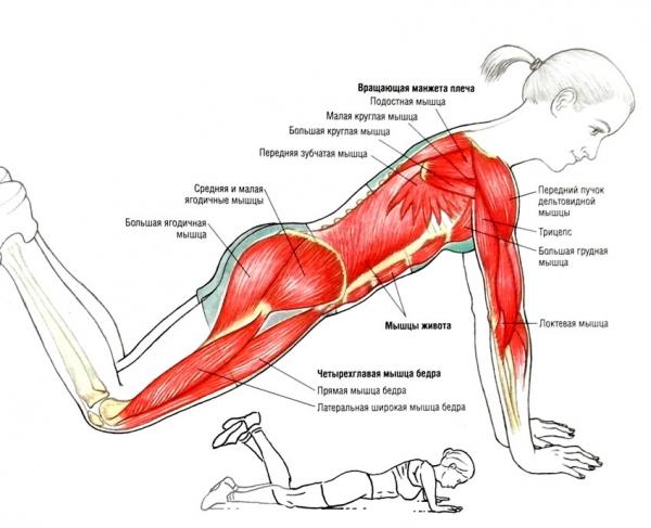Отжимание узким хватом от пола какие мышцы работают