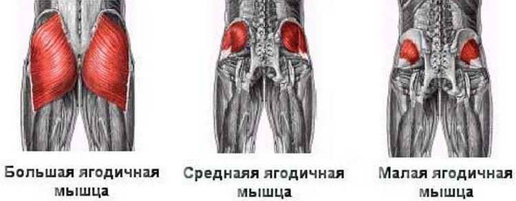 Как накачать ноги рост мышц