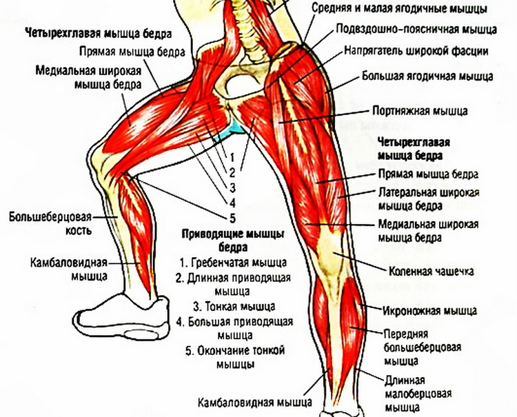 Укрепить суставы ног