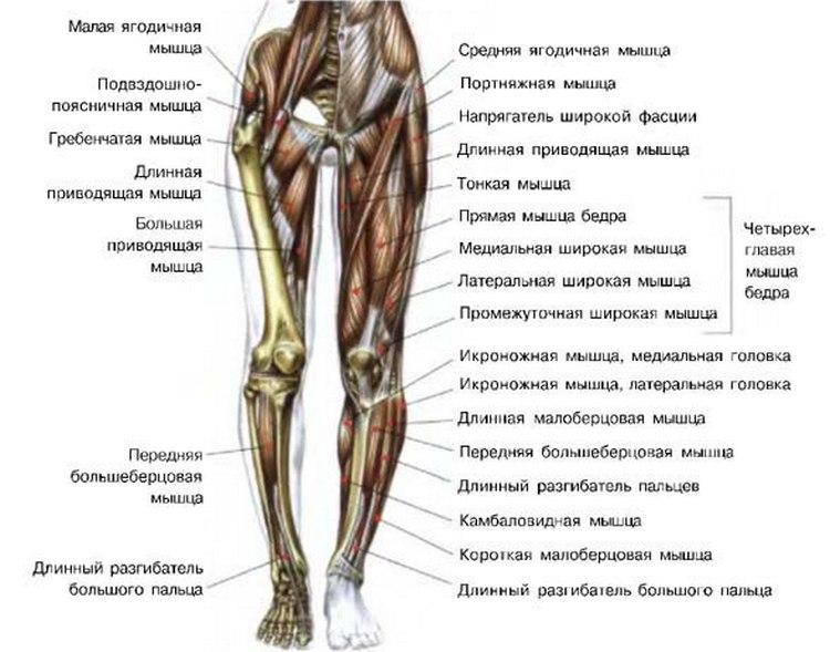 Зарядки для увеличения мышечной массы