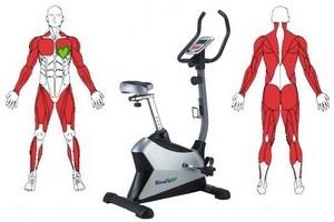 Боль после тренировки мышцы